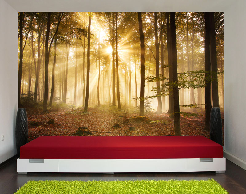 wandmotiv24 fototapete wald am morgen tapete kunstdruck wandbild landschaft online bestellen. Black Bedroom Furniture Sets. Home Design Ideas